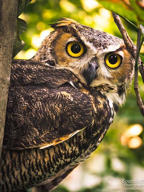 Platinum Sponsor Both Owls - Certificate download