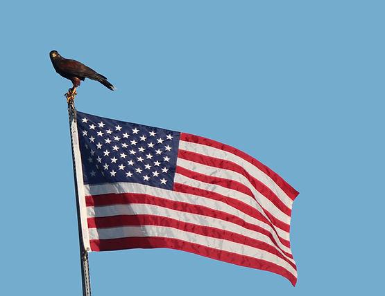 zeusflag.jpg