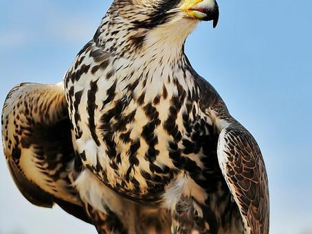 Meet the birds- Chula