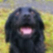 whitburn dog walker