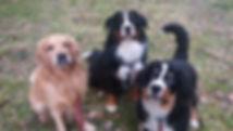 hunddagis hundkompisar