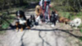 hunddagis promenad