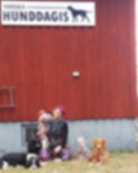 hunddagisföreståndare