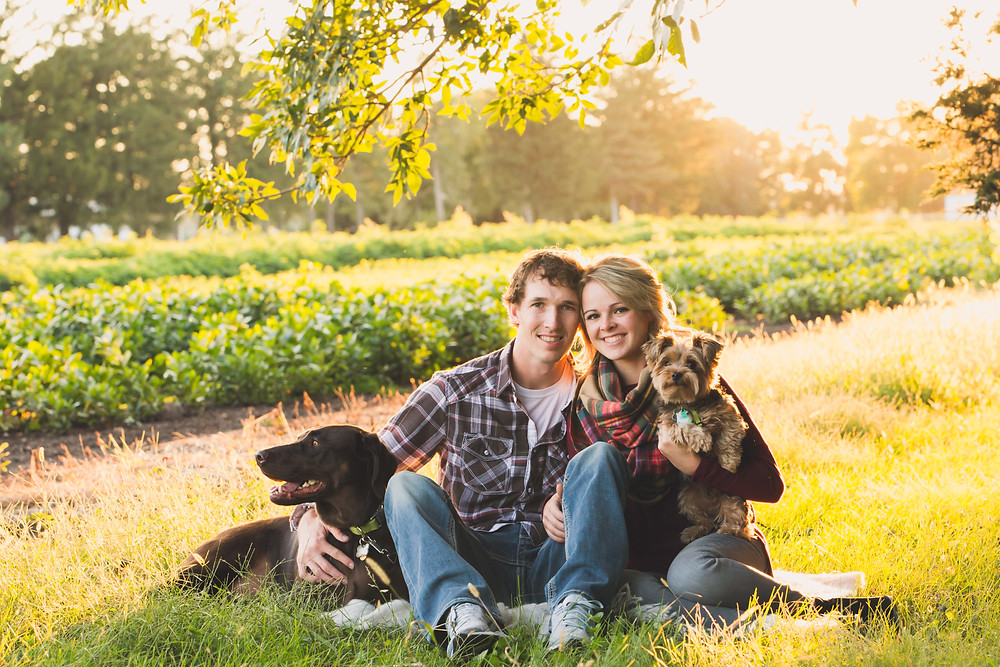 Engagement photos with their dogs