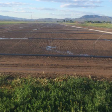 13 First Irrigation.png