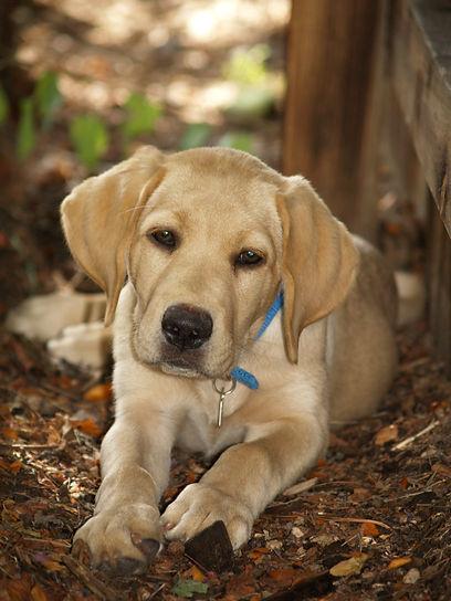 Virginia Beach Dog Training