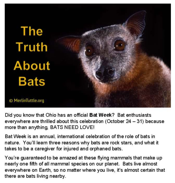 BATTalk_edited_edited.png
