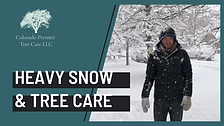 How to Protect Your Trees from Heavy Snowfall