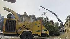 Pine Tree Removal in Evergreen Colorado | December 2020