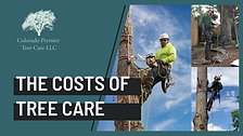 How Much Does Tree Work Cost?