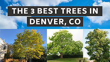 The 3 Best Trees to Have in Your Yard in Denver, Colorado