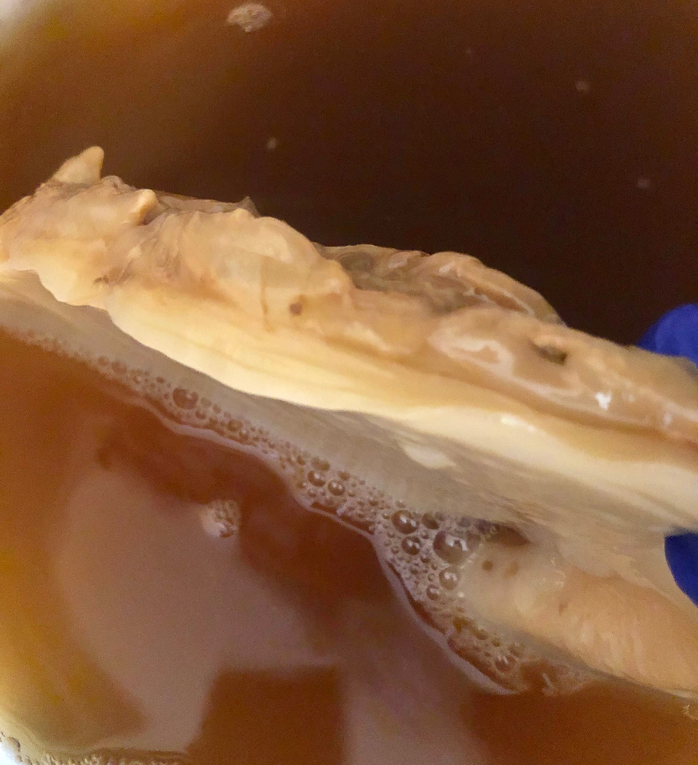 scoby, new layer formation, SCOBYs are used for making kombucha
