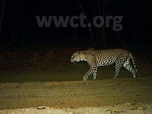 pic_wilpaththu_leopard_11.jpg