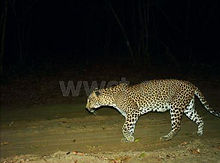 pic_wilpaththu_leopard_40.jpg
