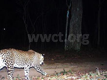 pic_wilpaththu_leopard_19.jpg