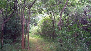 patch-forest-3.jpg