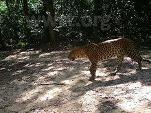pic_wilpaththu_leopard_9.jpg