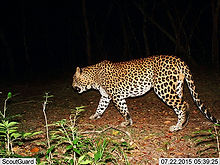 pic_wilpaththu_leopard_1.jpg