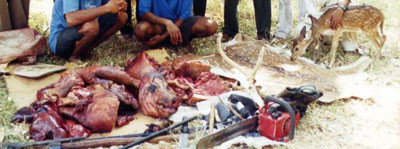 Confiscated poached meat, weapons and antlers. This type of poaching is on the rise with an increase in the commercial demand for bush meat