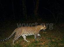 pic_wilpaththu_leopard_30.jpg