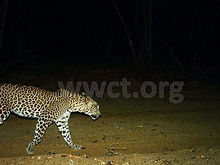 pic_wilpaththu_leopard_10.jpg