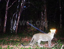 pic_wilpaththu_leopard_20.jpg