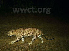 pic_wilpaththu_leopard_2.jpg