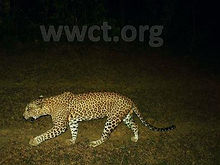 pic_wilpaththu_leopard_5.jpg