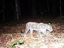 pic_wilpaththu_leopard_37.jpg