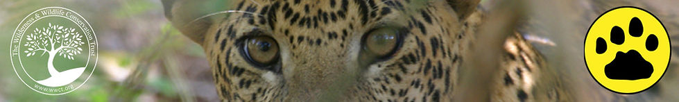 banner_the_leopard_project.jpg