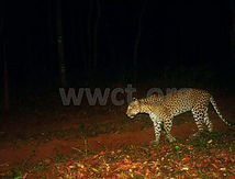pic_wilpaththu_leopard_41.jpg