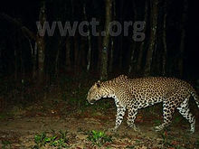 pic_wilpaththu_leopard_12.jpg
