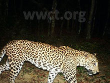 pic_wilpaththu_leopard_13.jpg