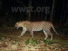pic_wilpaththu_leopard_14.jpg