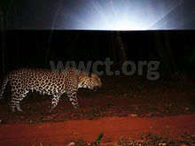 pic_wilpaththu_leopard_17.jpg