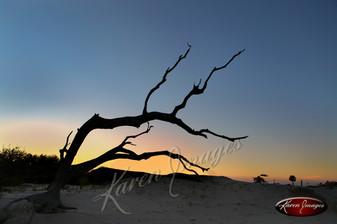 Nature images__Karen Images 2020038.jpg