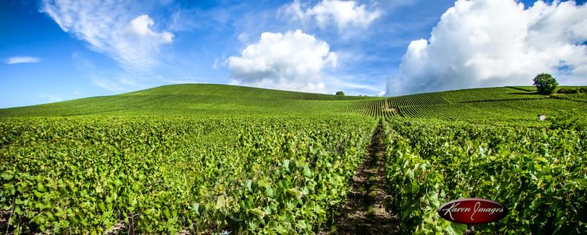 Royal Vineyards od Ay_Karen Images 2020.