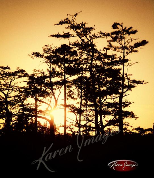 Nature images__Karen Images 2020059.jpg