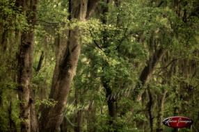 Nature images__Karen Images 2020060.jpg