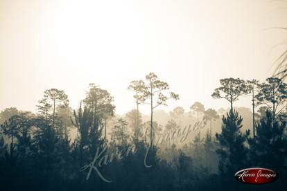 Nature images__Karen Images 2020048.jpg