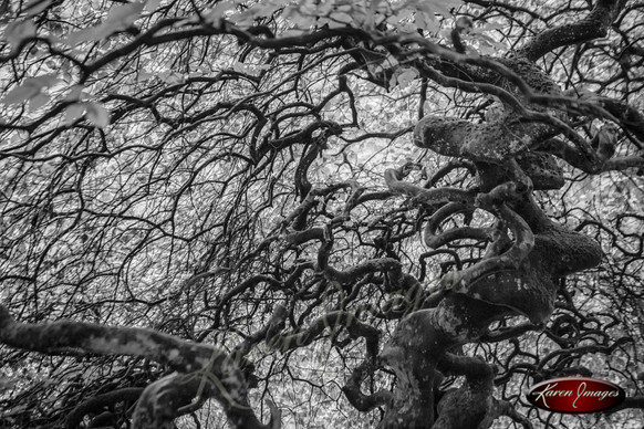 Twisted Forest Study 4_Karen Images 2020