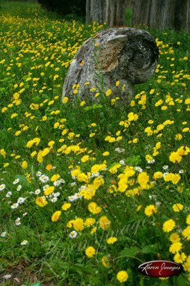 Nature images__Karen Images 2020067.jpg