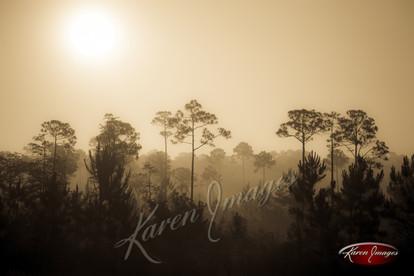 Nature images__Karen Images 2020049.jpg