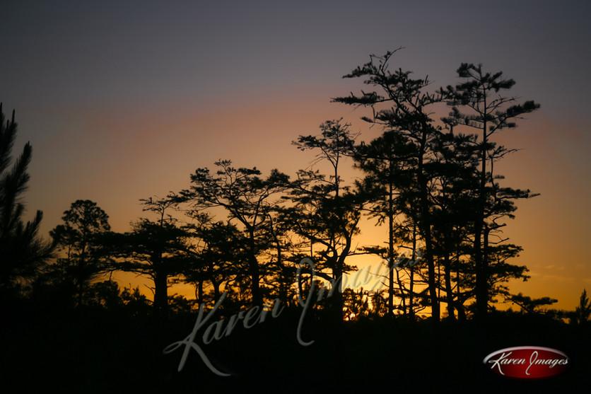 Nature images__Karen Images 2020055.jpg