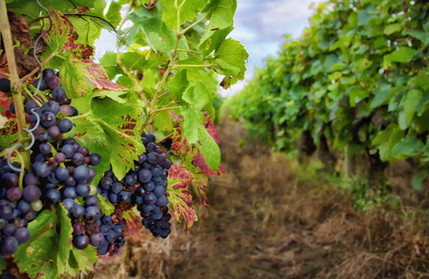 French Wine Country__Karen Images 2020 -