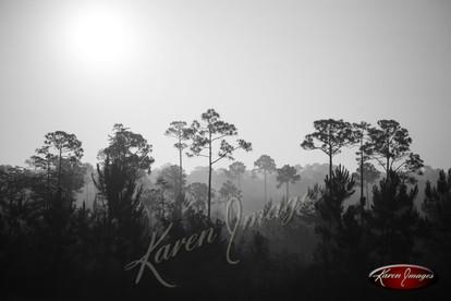 Nature images__Karen Images 2020050.jpg