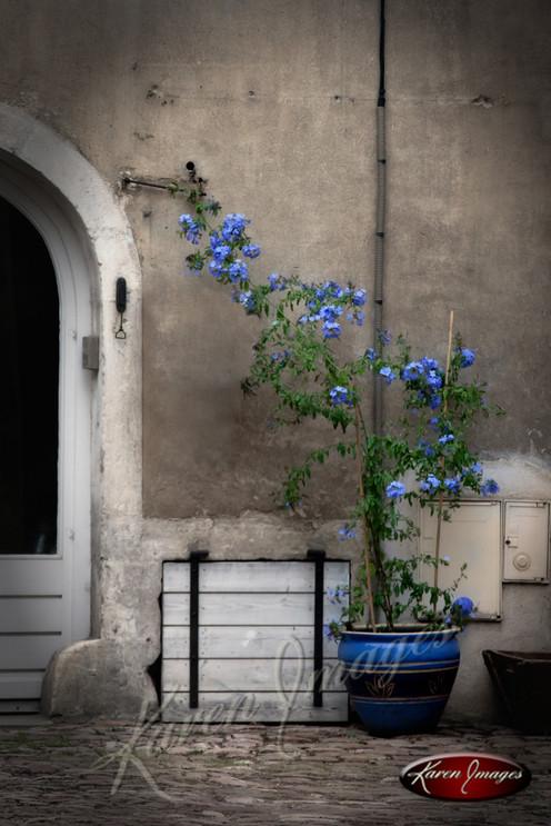 Fleurs en Bleu_Karen Images 2020.jpg