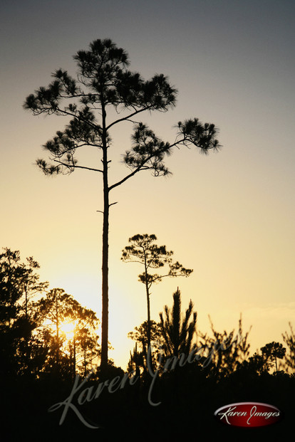 Nature images__Karen Images 2020058.jpg