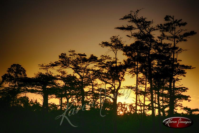 Nature images__Karen Images 2020056.jpg