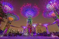 sg-night-gardens.jpg